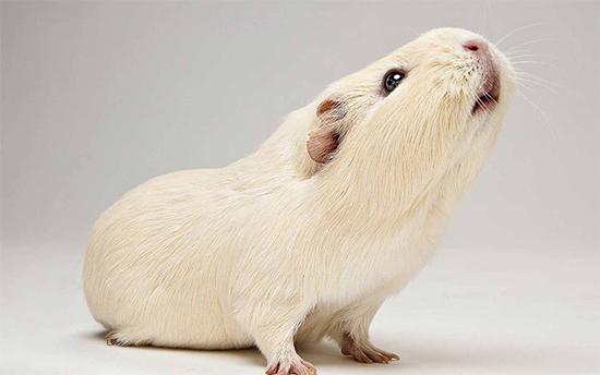 stop-esperimenti-su-animali-india